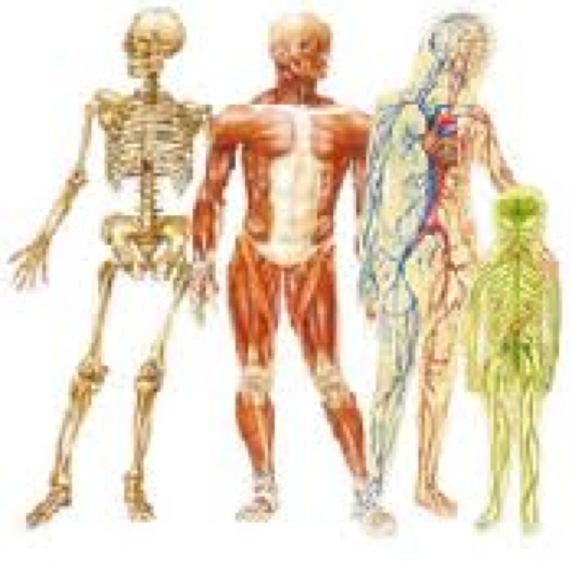 Blog 1 Introduction to Anatomy and Physiology - Anatomy and Physiology
